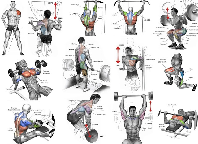 Muscle Names and Exercises to Help Train Health and Performance